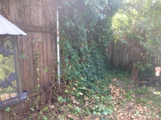 Ivy removal in pr0gress